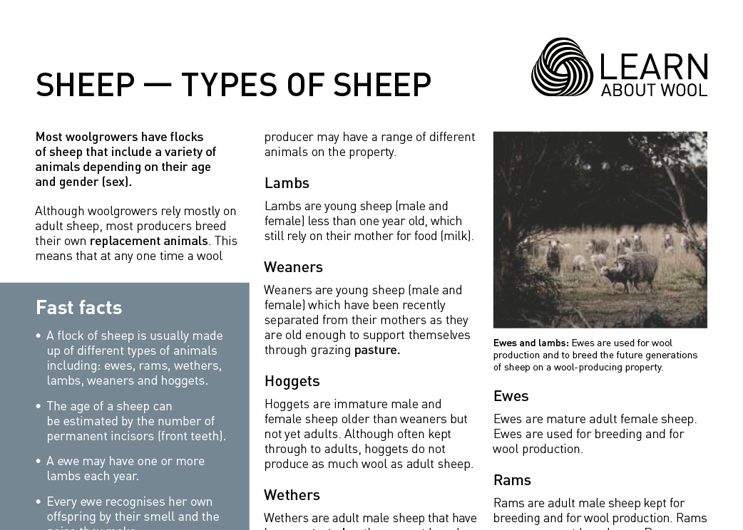 Sheep — types of sheep