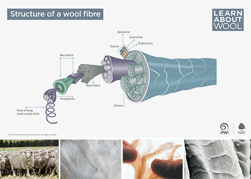 Structure of a wool fibre
